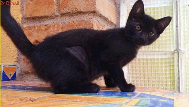 Linda gatinha preta busca um lar em SP