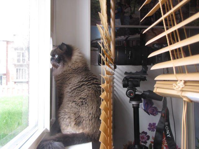 mon chat !  le curieux