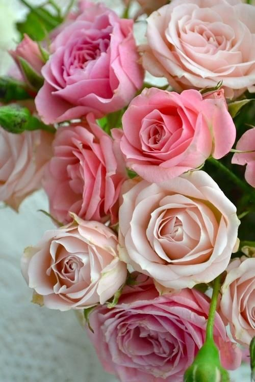 ❤︎ ~ My Love ~ Roses ~ ❤   Ana Rosa ✦ https://www.pinterest.com/sclarkjordan/~-my-love-~-roses-~/