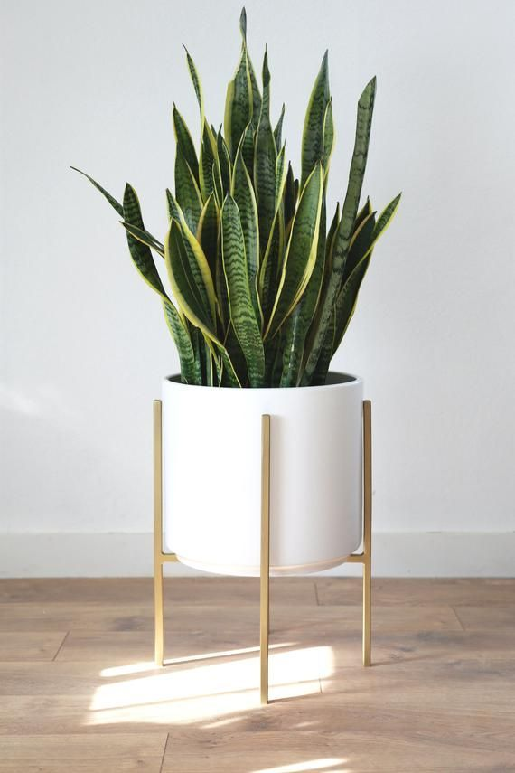 Large White Planter With Snake Plant Mid Century Modern Planter Metal Plant Stand Plant Decor