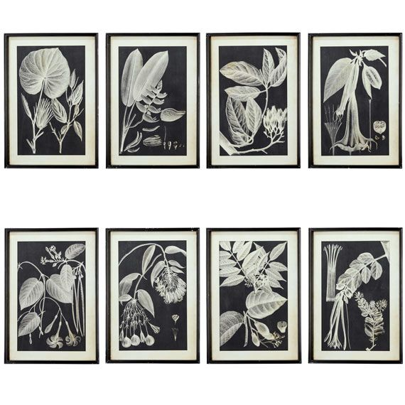 Leaf Photogram Framed Prints Set Of Eight Black White