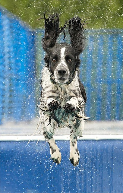 Rupert Gets Vertical by Steve Collins Photography (momofoto) on Flickr,  Well, this isn't my dog, but this dog is certainly cute!