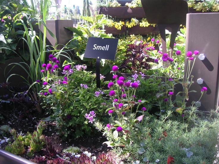 43 Best Images About Sensory Gardens On Pinterest Gardens Herbs Garden And Garden Signs