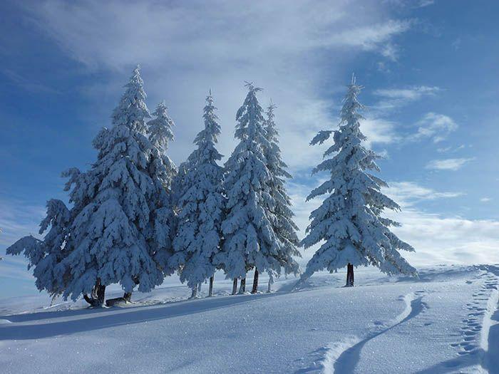 Feldberg #schwarzwald #feldberg
