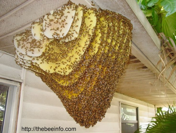 Different Types Of Honey Bee Hives Picture – Natural And Apiary Hives.Different Types Of Honey Bee Hives Picture – Natural And Apiary Hives.