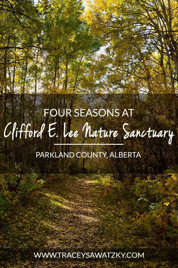 Four Seasons at Clifford E. Lee Nature Sanctuary - Parkland County, Alberta