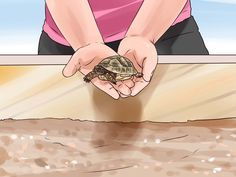 Hermann's tortoises are naturally suited to hot, humid environs. If you are going to keep tortoises healthy in captivity, you must mimic their natural ecosystem. Make sure that they have plenty of light, heat, and space to dig. Happy,...