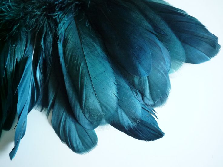Dark Teal 52 best turquoise to teal images on pinterest | teal, nature and