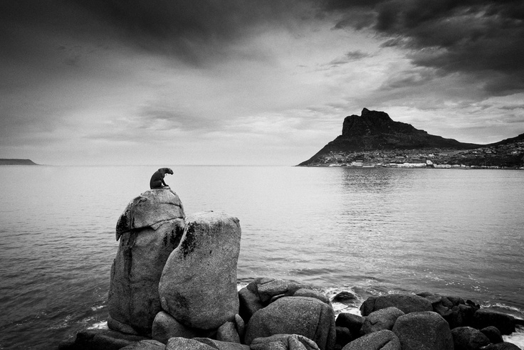 Hout Bay, Cape Town.  Leopard statue overlooking Hout Bay.