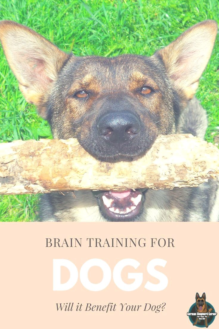 How To Identify Good Dog Training Schools Dog Training Near Me