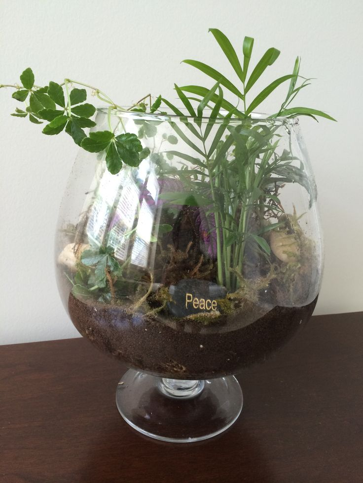 It's a jungle out there terrarium by Niti Nielsen
