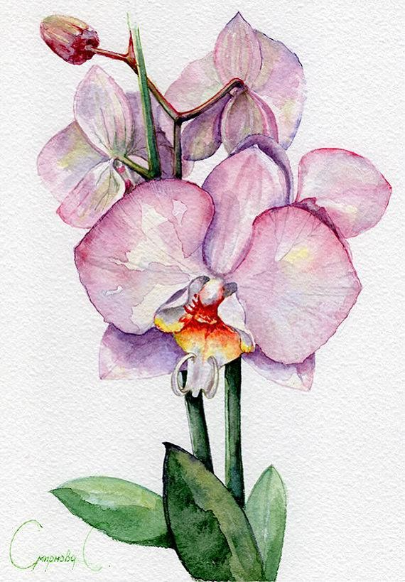 Orchid Flowers Purple Pink Green Yellow Watercolor Original