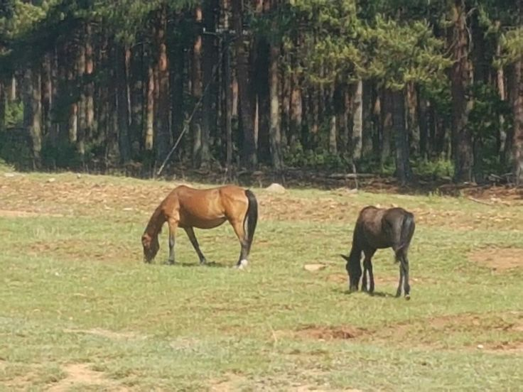 Wild Horses @ Kaapsehoop