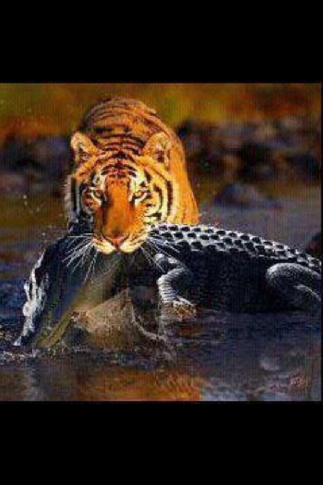:) Geaux Tigers!! #LSU
