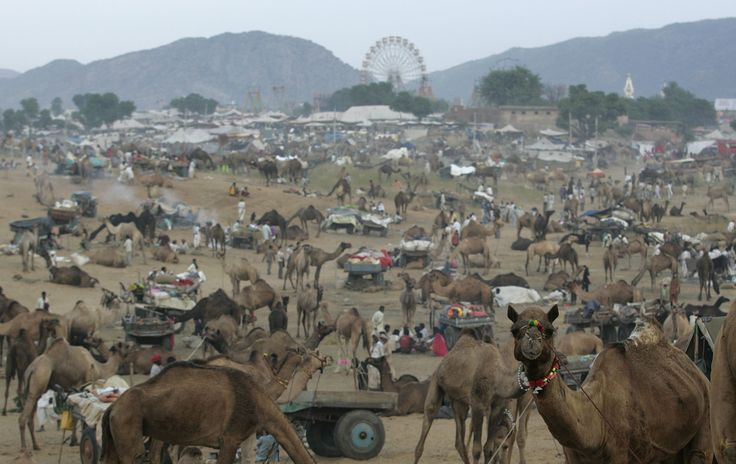 Visit Pushkar Fair 2014  Pushkar Fair runs from Sunday 26 October to Tuesday 4 November, and is a great way to experience Pushkar Fair.  call today: 02084323472 or visit this link: http://www.tourpackagesrajasthan.org/pushkar-fair