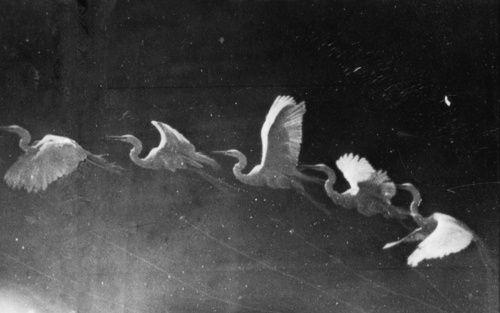 Eadweard Muybridge. Flight of swans, sequence, order, pattern, control.