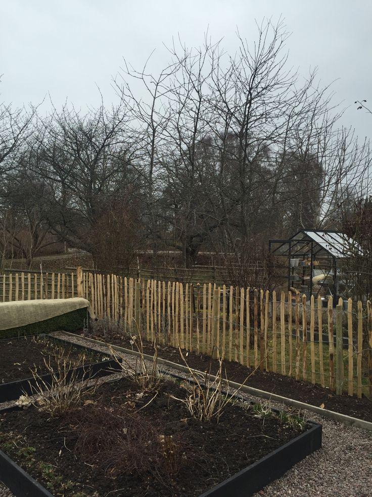 Chestnut fence in My kitchen garden!