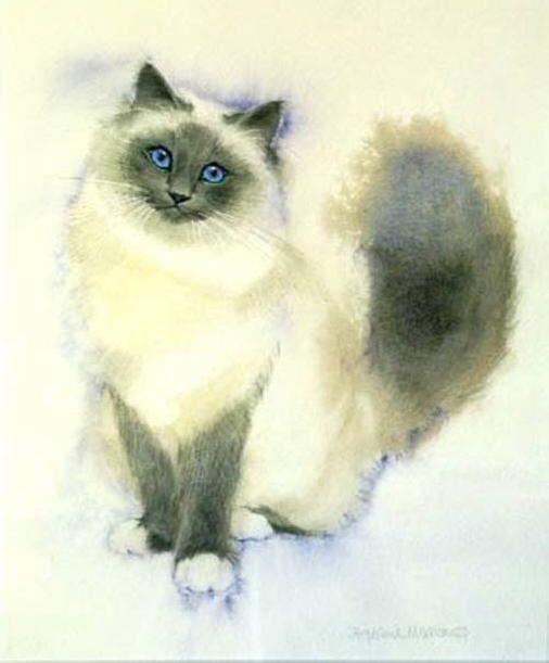 Birman stephanie manchipp art du chat pinterest for Chambre 8x10