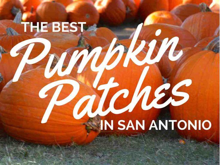 The best pumpkin patches in San Antonio, Texas.