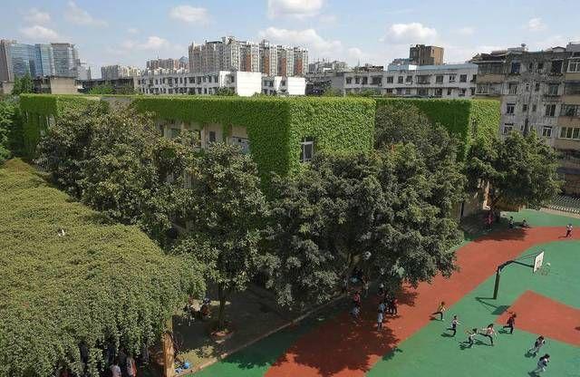 """这个学校教学楼被爬山虎""""吃""""掉了?-凤凰新闻"""