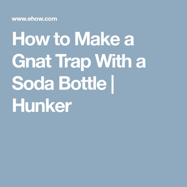 How to Make a Gnat Trap With a Soda Bottle   Hunker