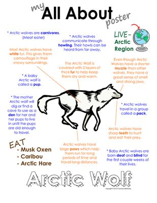"""My All About Arctic Wolf Book - (Arctic/Polar Animals) from Courtney McKerley on TeachersNotebook.com (9 pages)  - This """"All About"""" book will be a fun addition to your classroom and lessons on the Arctic wolf. Also available as a polar animal bundle pack along with Emperor Penguin, polar bear, caribou and walrus."""