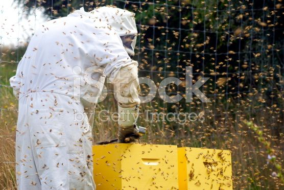 Beekeeper and Beehives royalty-free stock photo