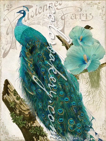 Aqua Peacock (Les Paons) by Mindy Sommers. Available or customization on home decor accents and art gifts, also available for art licensing. #peacock http://fineartamerica.com/featured/les-paons-mindy-sommers.html
