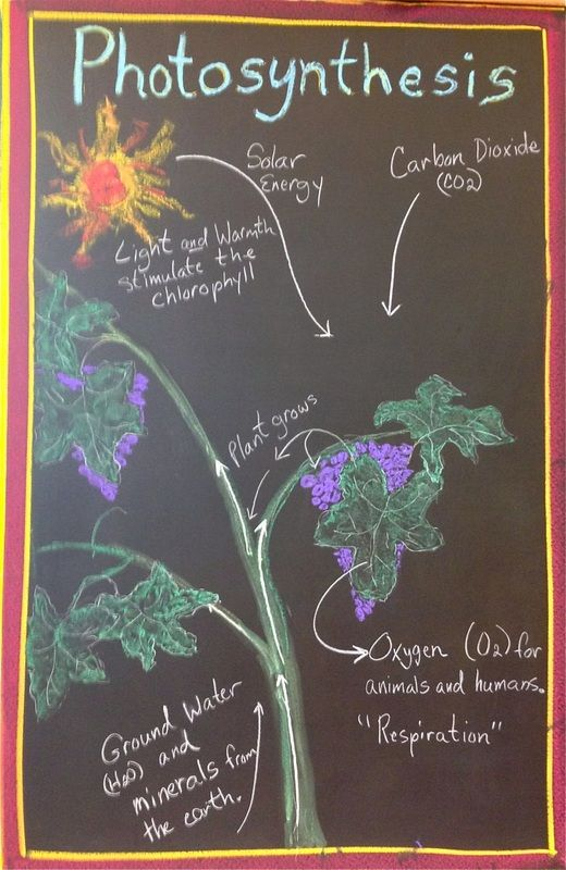 Chalkboard Photosynthesis