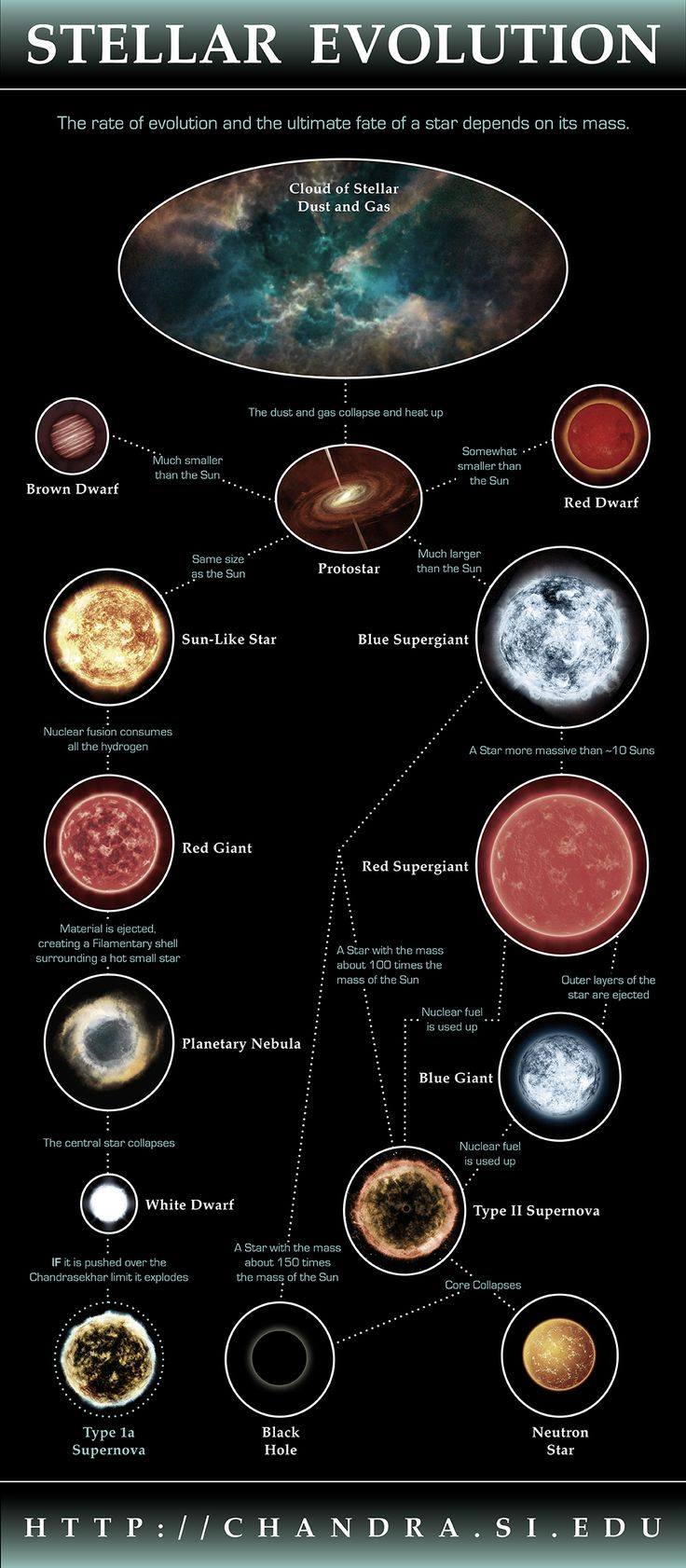 Stellar Evolution Infographic: The rate of evolution and the ultimate fate of a star depends on its mass.  (Illustration: NASA/CXC/M.Weiss)