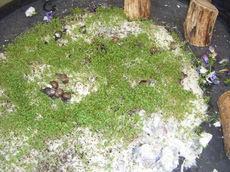 We used sodden tissue and newspaper to grow cress hills, sprinkled on a Friday - ready to play with on the Monday - we kept it for 1 week - using plastic mini-beasts and small world items first and finishing off with real snails from the garden (we put them back afterwards!)