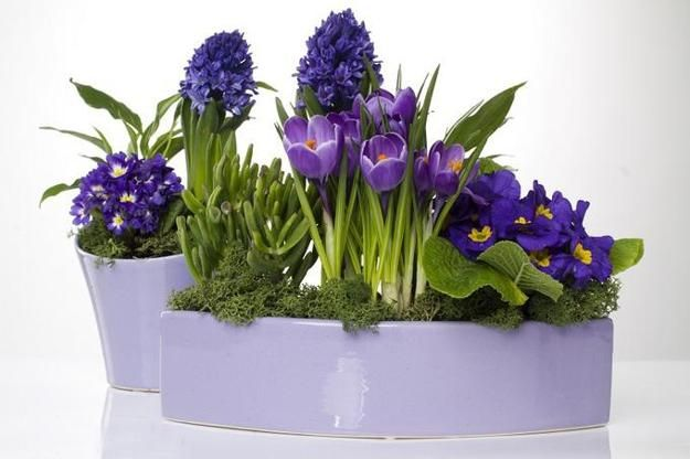 mothers day presents, containers for home decorating with flowers and plants