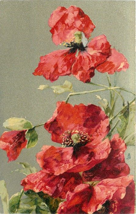red poppies 1907