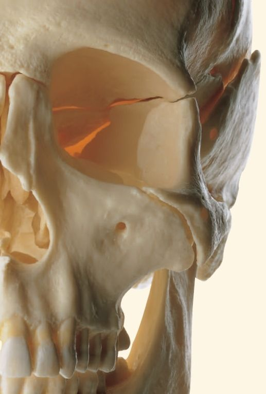 The 87 Best Anatomy Models Images On Pinterest Anatomy Models