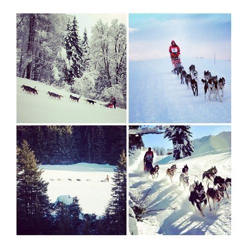 GRANDE ODYSSEE SAVOIE MONT BLANC : Découvrez le mardi 14 janvier 2014, à Praz de Lys Sommand, la 3ème édition de l'Odyssée des enfants. 20 élèves en classe de 4ème s'élanceront avec des attelages de 3 chiens pour une course de 5 km, sur le début de la même piste que celle qui sera utilisée quelques heures avant par les champions de La Grande Odyssée Savoie Mont Blanc.