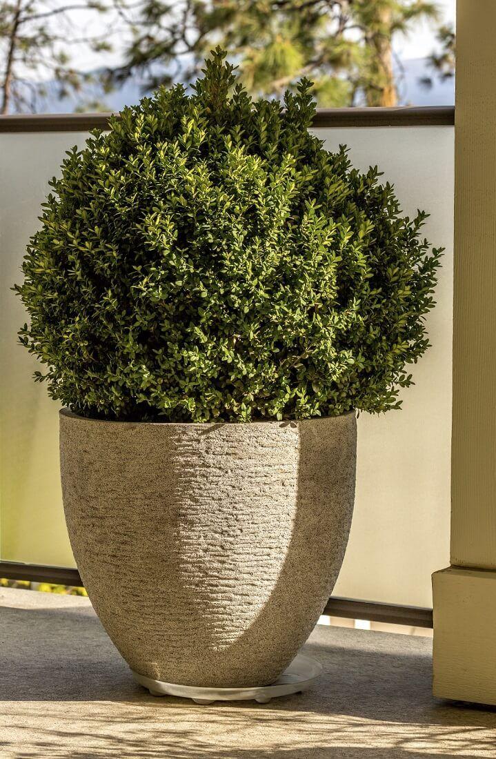 die besten 17 ideen zu buchsbaum schneiden auf pinterest. Black Bedroom Furniture Sets. Home Design Ideas