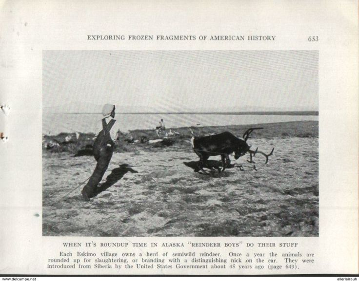 "When It`s Roundup Time In Alaska ""Reindeer Boys"" Do Their Stuff /  Print, Taken From A Journal/ 1939 - Bücher, Zeitschriften, Comics"