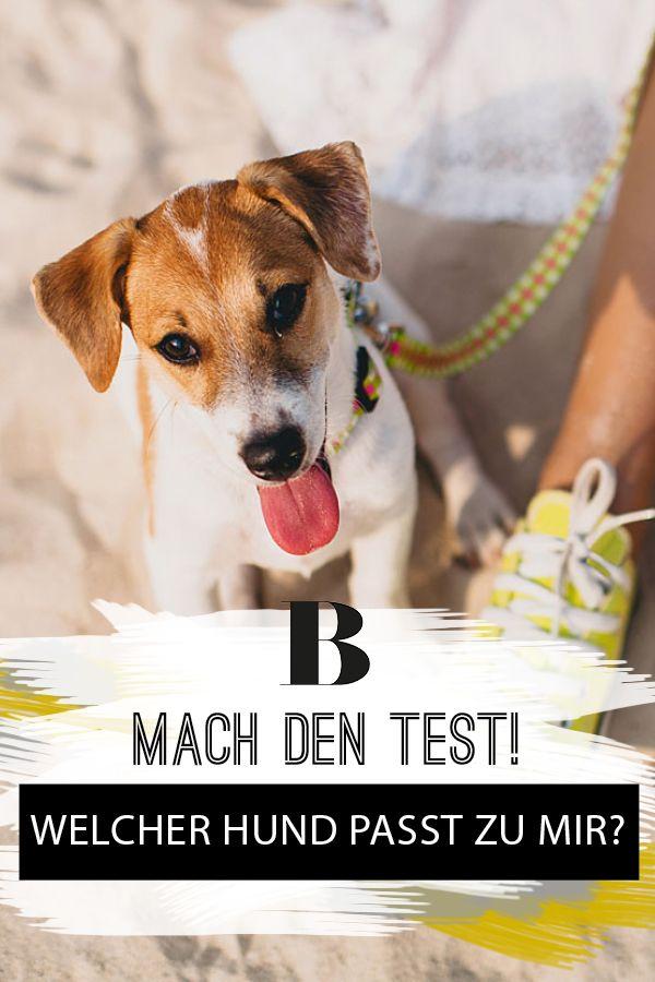 Du denkst darüber nach, dir einen Hund anzuschaffen? Dann hast du die Qual der Wahl aus über 400 Hunderassen. Unser Test hilft dir bei der Entscheidung. Welcher Hund passt zu mir? Mach den Test!