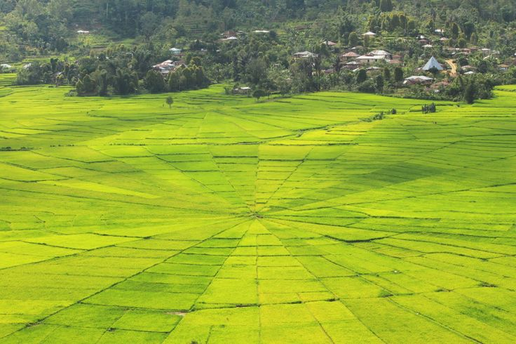Spider Web-looked alike Paddy Fields at Cancar - Manggarai, East Nusa Tenggara, Indonesia