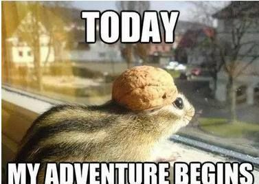 a2fb0c372a786cd3e49b31bf779f9d0a animal puns funny memes 497 best adorable animals images on pinterest animals, adorable,New Month Meme