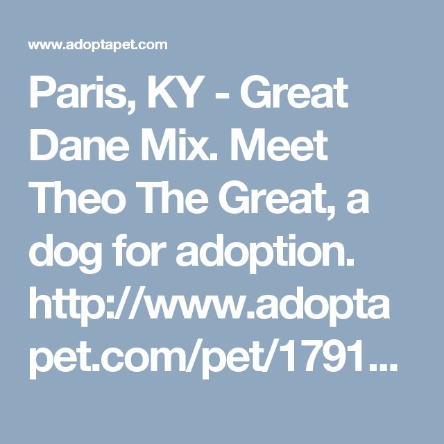 Paris, KY - Great Dane Mix. Meet Theo The Great, a dog for adoption. http://www.adoptapet.com/pet/17913849-paris-kentucky-great-dane-mix