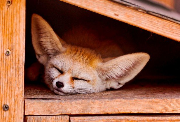 10 Adorably Sleepy Animals That Ate Too Much Dinner