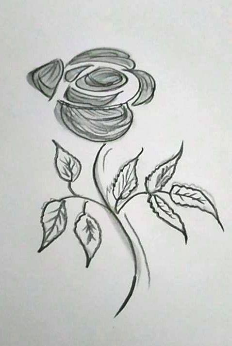 Bleistiftskizze einer Rose als Geschenk für Elke / Pencil sketch of a rose (S. Erarslan)