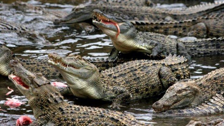 Mujer se suicida en un estanque de cocodrilos - http://notimundo.com.mx/mundo/mujer-se-suicida-en-un-estanque-de-cocodrilos/16067