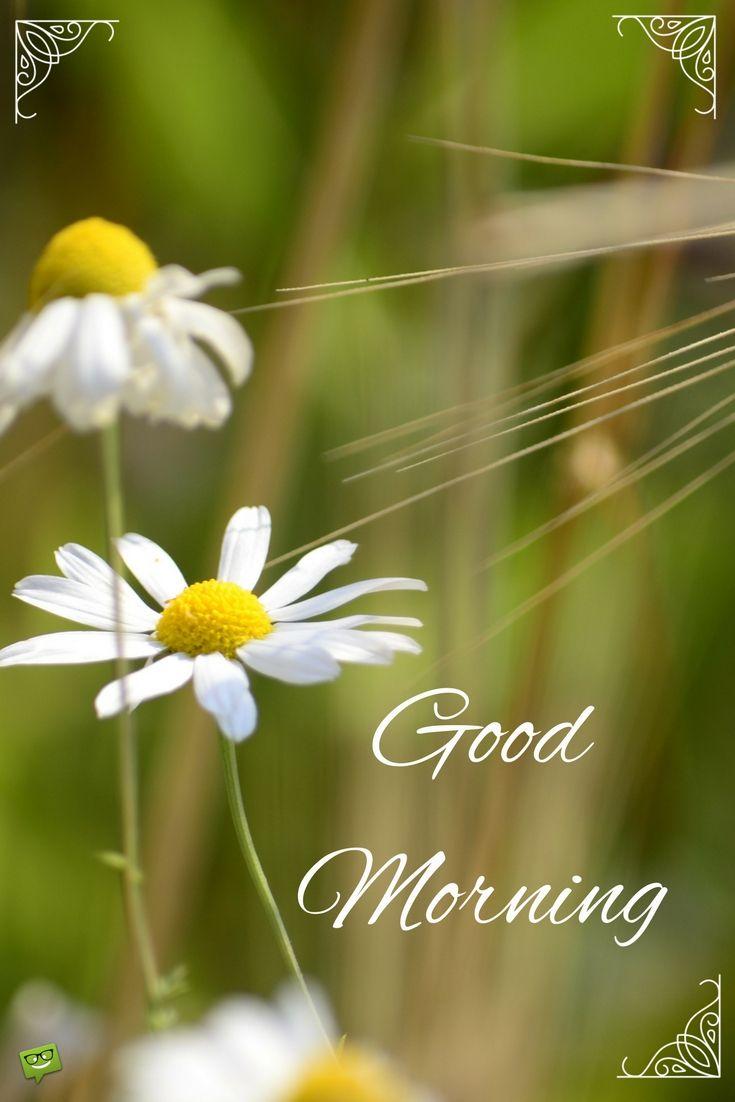 3191 besten good morning gifs good morning bilder auf pinterest buen dia gute nacht und. Black Bedroom Furniture Sets. Home Design Ideas