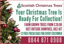 Local eco business: Scottish Christmas Trees (Thank you fo keeping us posted on DGWGO)