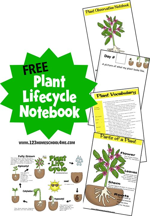 FREE Plant Life Cycle notebook for preschool or homeschool kids for an earth science or garden unit in the spring.