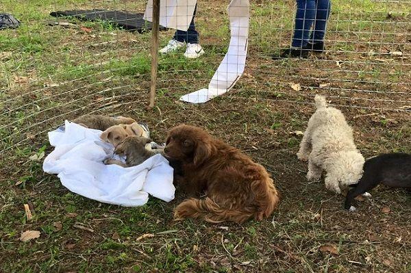 Refugio para animales tras paso de tormenta
