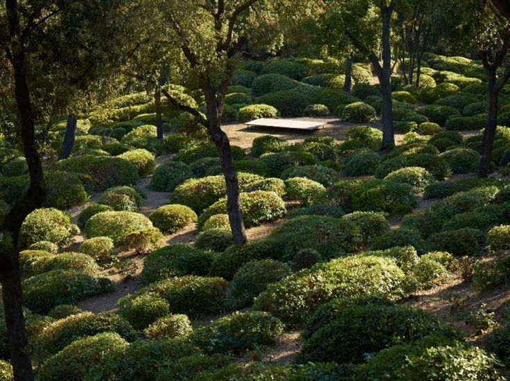 117 best Hedges and topiary images on Pinterest Gardens