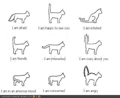 Interpretive cat tail language @Nicole Roscini @Annalisa Cividati
